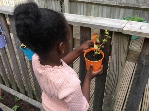 Caring for flowers